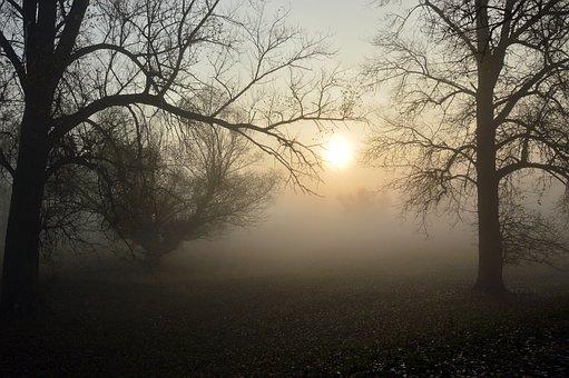 Fog, Landscape, Morning Hours, Sunrise, Nature, Aue