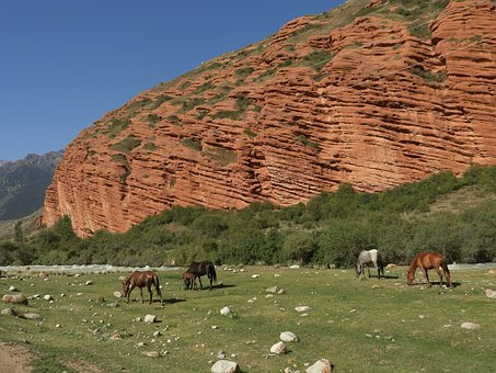 Mountains, Alpine Meadow, Pasture, Herd