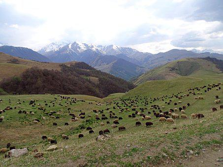 Mountains, Alpine Meadow, Pasture, Herd, Sheep, Flock