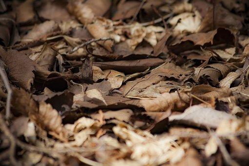 Fallen Leaves, Dead Leaves, Autumn, Natural, Leaf