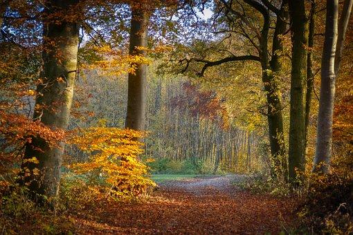 Nature, Landscape, Forest, Autumn, Away, Abendstimmung