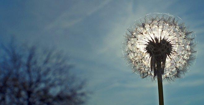 Flower, November, Sunshine, Light