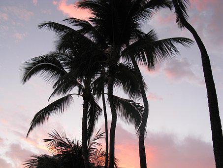Palm Trees, Pink Sky, Hawaii, Sunset, Pink, Sky
