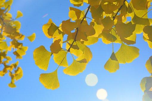 Autumn, Beijing, Fragrant Hill, Park, Colorful