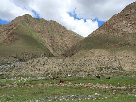Mountains, Alpine Meadow, Pasture, Herd, Flock, Sheep