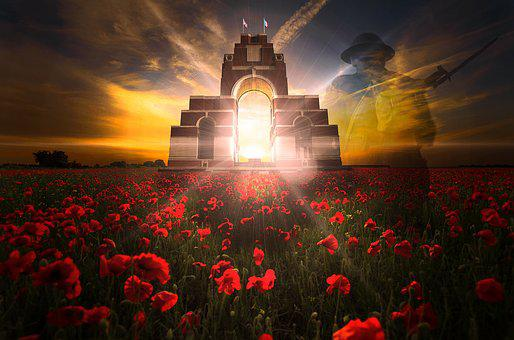 Remembrance Day, Veterans Day, Poppy Field, Poppies