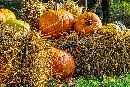Pumpkin, Halloween, Decoration, Straw Bales, Orange