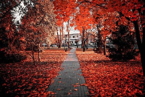Autumn, Red, Foliage, Colors, Colour, Nature, Leaf