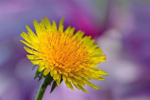 Flower, Spring, Nature, Plant, Flora