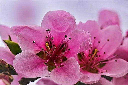 Flower, Spring, Nature, Flora