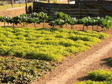 Garden, Space Of Culture, Summer, Culture, Plants, Bio