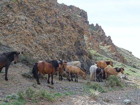 Mountains, Alpine Meadow, Pasture, The Herd, Horses