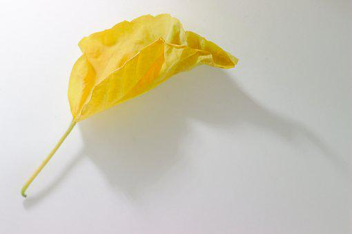 Yellow, Sheet, Autumn, Listopad, To Fall, To Fade