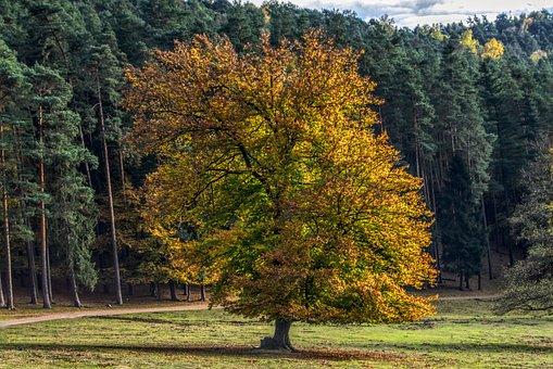 Autumn, Trees, Mood, Sun, Backlighting, Colorful