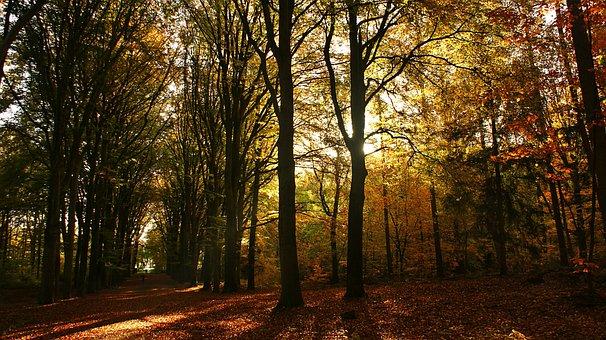 Forest, Trees, Morning, Sunrise, Twilight, Sunshine