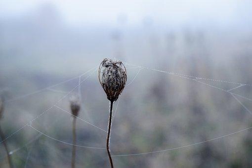 Spider Web, White, Nature, Creepy, Black, Cobwebs, Trap