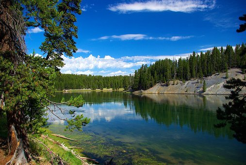 River Above Hayden Valley, Yellowstone, River, Wyoming