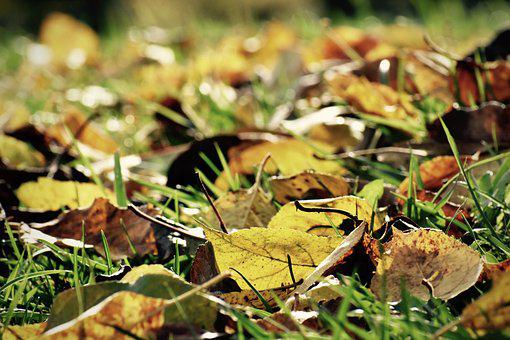 Leaves, Fall, Autumn, Ground, Grass, Yellow, Brown, Dry