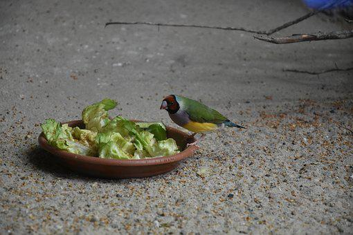 Bird, Salat, Plate, Animal, Meal, Hunger, Nature, Zoo
