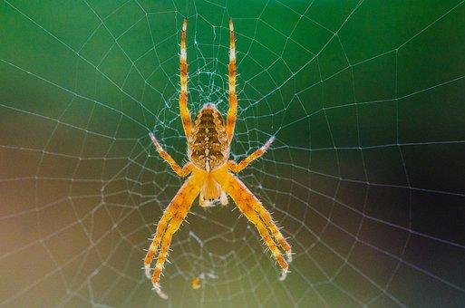 Spider, Web, Cobweb, Close Up, Animal, Case, Cobwebs
