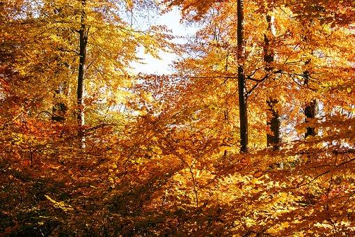 Autumn, Autumn Forest, Deciduous Forest