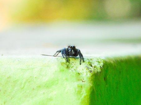 Spider, Black, Small, Macro