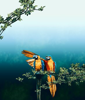 Bird, Parrot, Macaw, Branch, Love, Romance, Courting