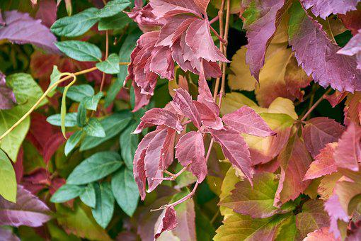 Leaves, Autumn, Colorful, Red, Bright, Leaf, Forest