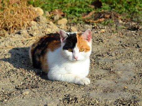 Cat, Kitten, Black, Red, White, Cat's Eye, Harlequin