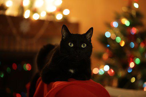 Christmas Cat, Cat, Christmas, Christmas Tree, Holiday