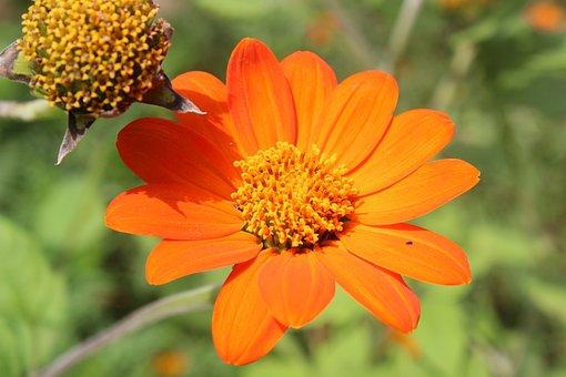 Flower, Nature, Orange, Garden, Petals, Color
