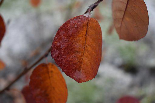 Sheet, Color, Snow, Ice, Autumn, Frost, Colorful