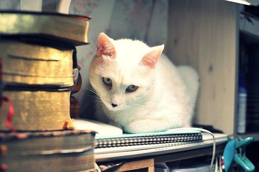 Cat, White, White Cat, Cute, Animal, Sweet, Mammals