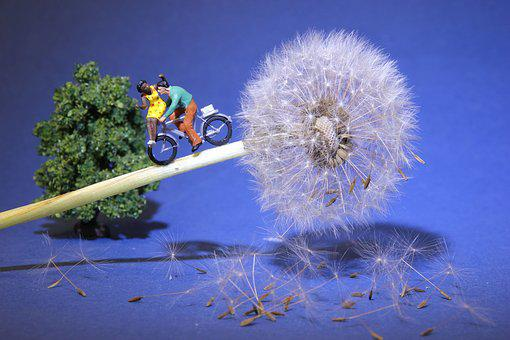 Dandelion, Cycling, Miniature Figures, Rendezvous