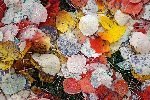 Leaves, Colorful, Diversity, Difference, Autumn, Nature