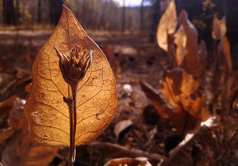 Fall, Plant, Nature, Dry, Autumn, Husk, Flower, Forest