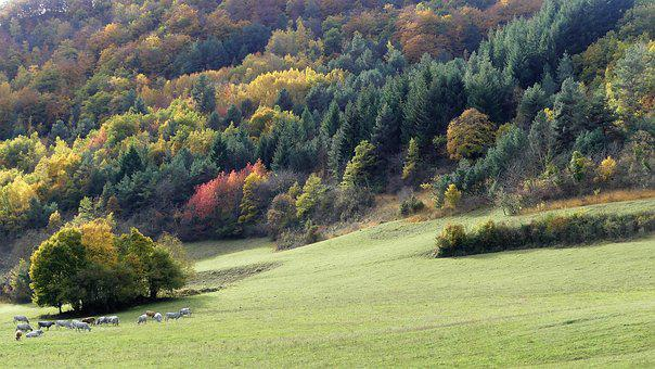 Landscape, Nature, Trees, Mountains, Fall, Color