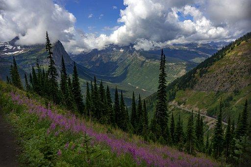 Glacier National Park, Highline Trail, Fireweed