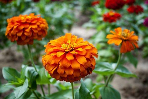Sun Flower, Beautiful Flowers, Flower