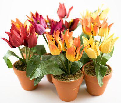 Flowers, Flower Pot, Nature, Flower, Spring, Plant