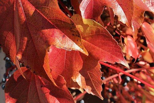 Collapse, Red, Autumn, Foliage, Park, Seasonal, Leaf
