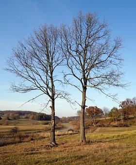 Path, Trees, Nature, Autumn, Forest, The Sky, Slovakia