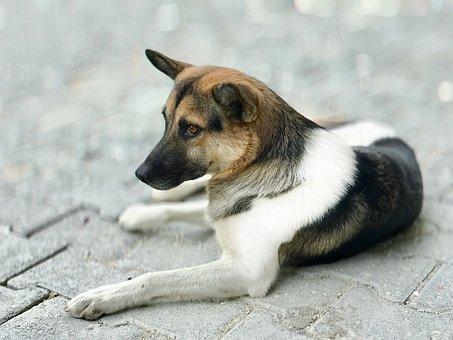 Dog, Wolf, Animal, Creature, Friend, Mammals