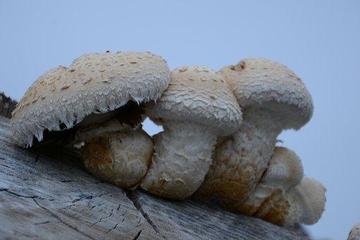 Fungus, White, Nature, Autumn, Forest, Mushrooms, Hat