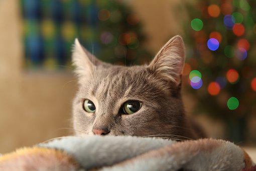 Christmas Tree, Type, Holiday, Cat, Gray Cat, Mustache