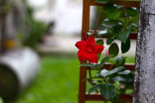 Flower, Red, Green, Botany, Nature, Garden, Plant