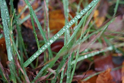 Grass, Droplets, Green, Flora, Drops, Raindrop, Road