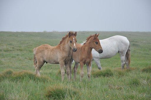 Horse, Foal, He Has Bay Horses, Wild Horses
