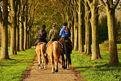Horse Rider, Horse Woman, Horseback, Sport, Riding