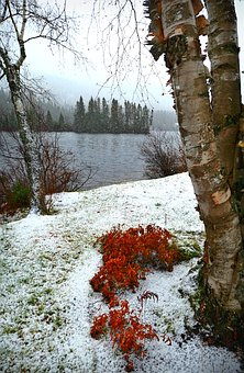 Landscape, Nature, Trees, Birch, Fall, Cold, Snowy